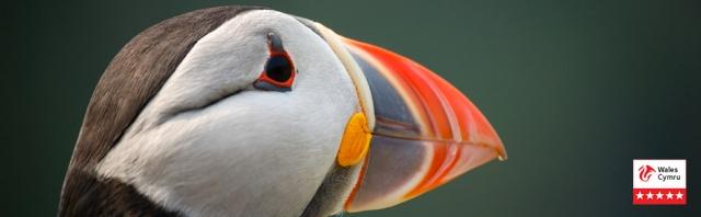 Pembrokeshire Wildlife - visit Skomer Island