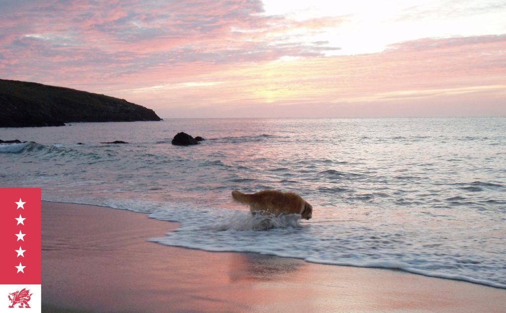 Dog paddling off the beach at sunset