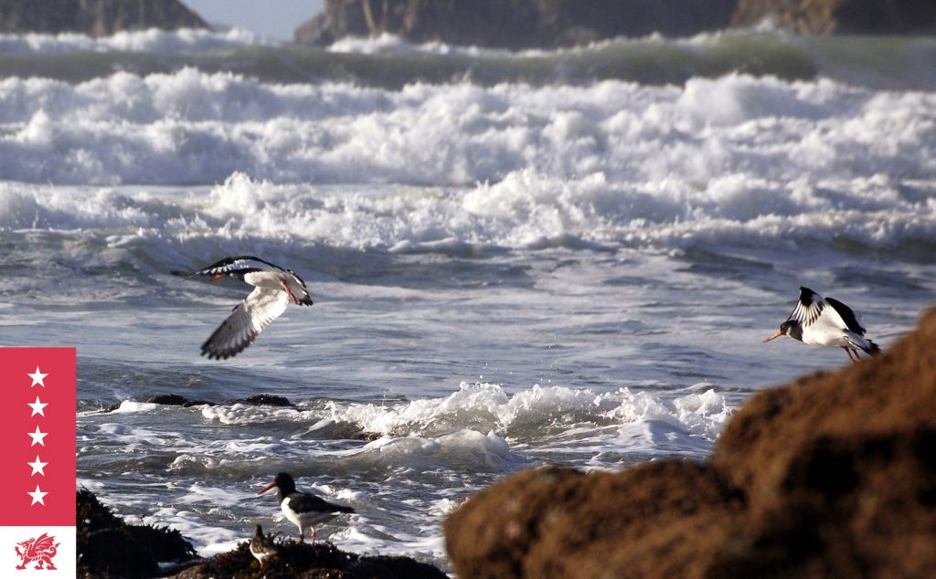 Seabirds take flight